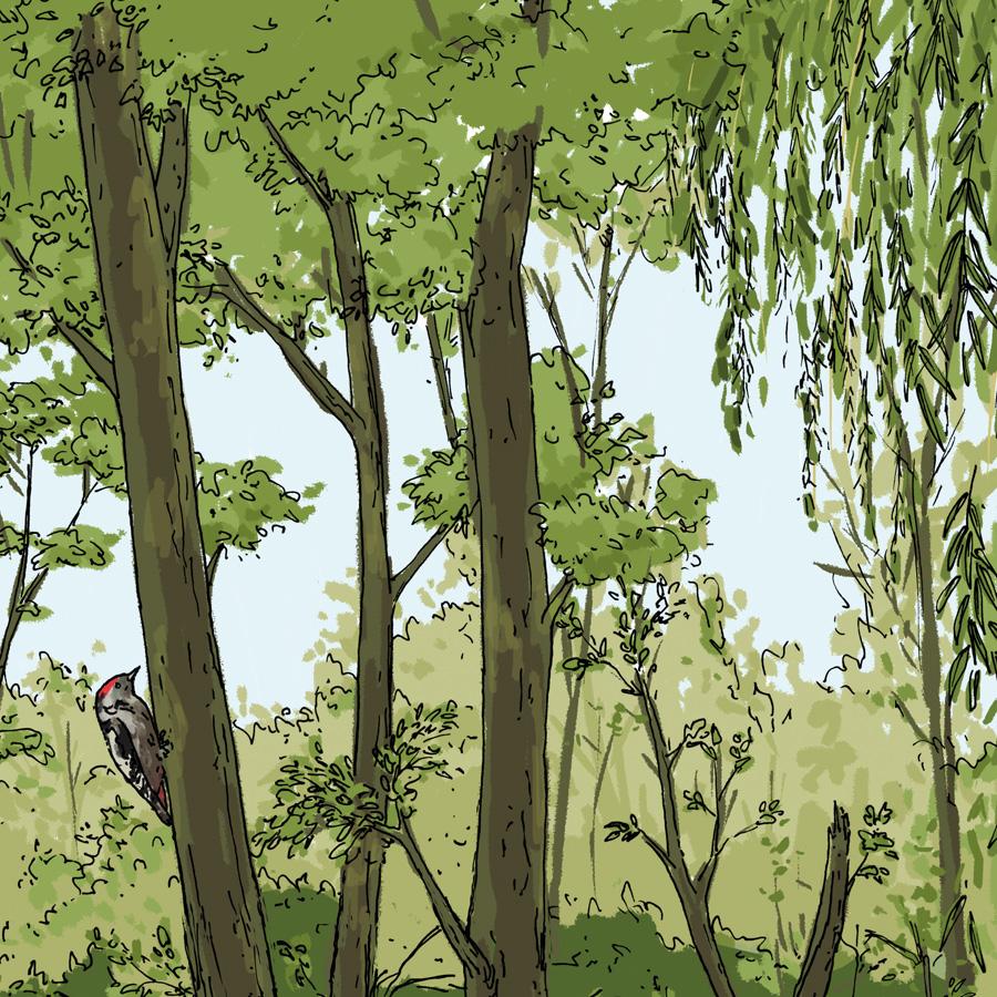 ingmar süß, illustration, suessartwork, zeichnung, wimmelbild, digital, kunst, wissen, ausstellung, natur, io, tiere, flora, fauna, pflanzen, biber, vögel, bäume, rhein, auwald, hochwasser